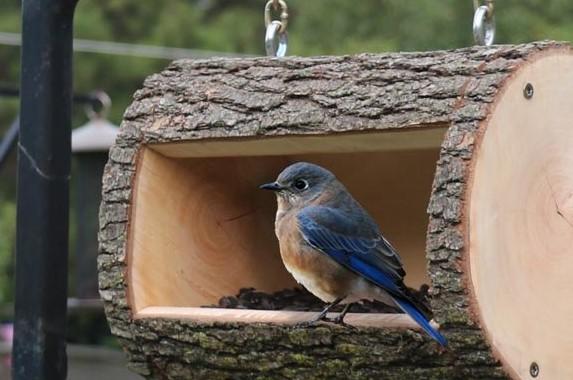 DIY Bird Feeder Plans Homemade Log Birdfeeder 2