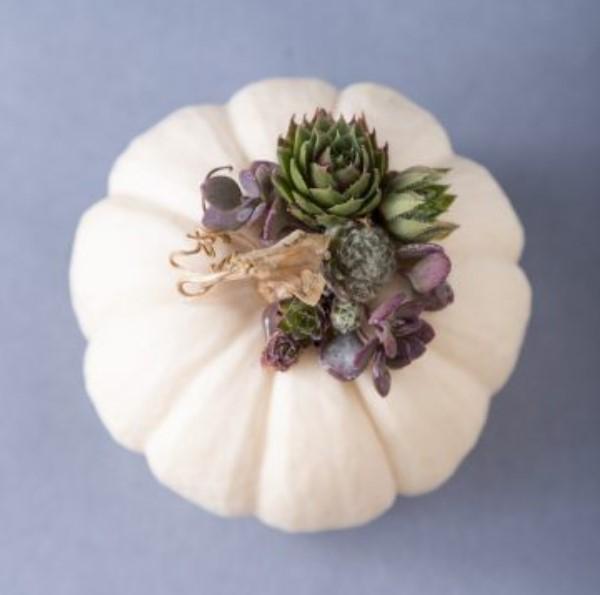 Miniature Succulent Topped Pumpkin Tutorial
