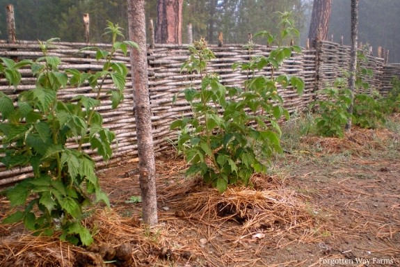Wattle Fencing step by step