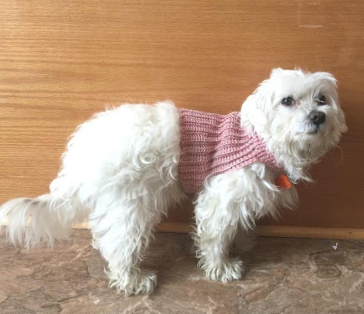 DIY Crochet Dog Sweater