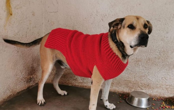 Doggy Sweater Size Medium